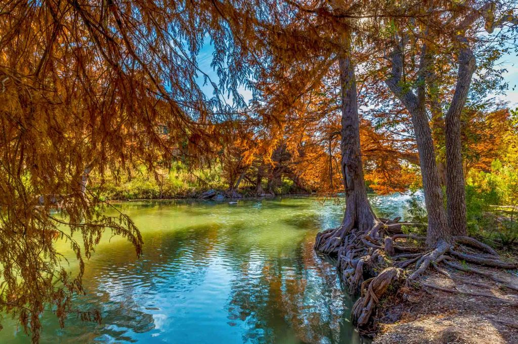 Fall Foliage on Guadalupe State Park near San Antonio, Texas.