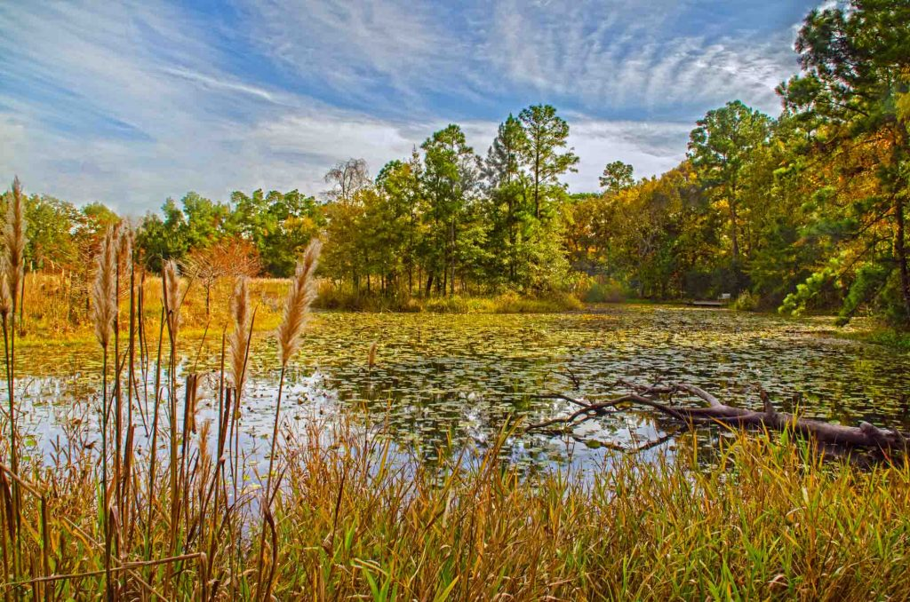 Exploring the outdoors in Houston Arboretum is one of the best things to do in Houston, Texas