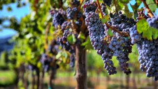 best Wineries in Fredericksburg, TX