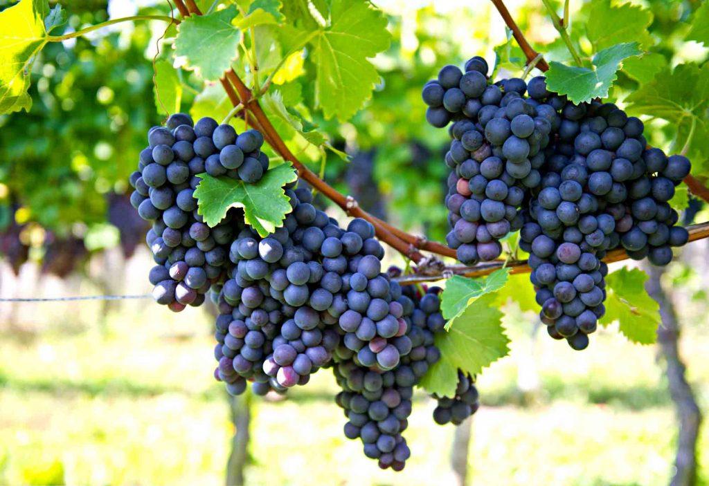 Becker Vineyards  is one of the best Wineries in Fredericksburg, TX
