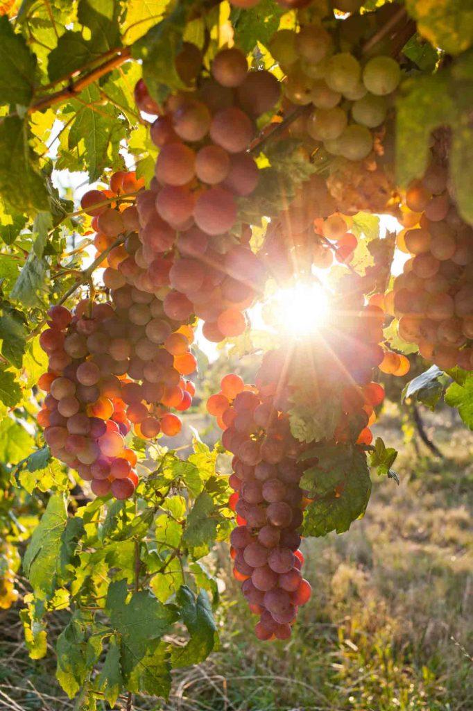 Messina Hof is one of the best Wineries in Fredericksburg, TX