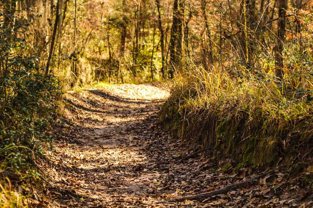 Lone Star Hiking Trail is offers some of the best hiking in Houston