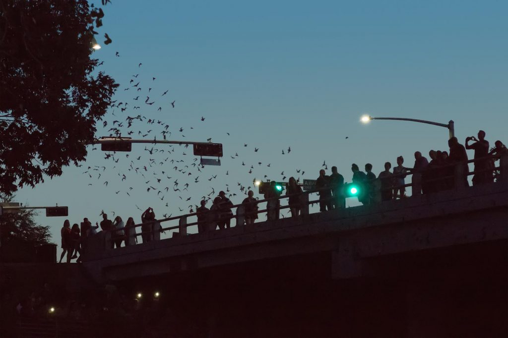 Watching a Batty Ballet at Waugh Drive Bridge is one of the unusual things to do in Houston, Texas