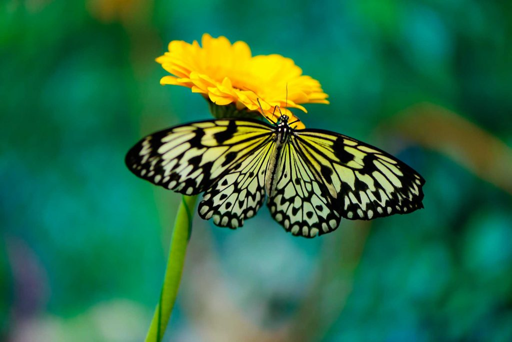Enjoying the Butterfly House at Texas Discovery Gardens is one of the things to do in Dallas