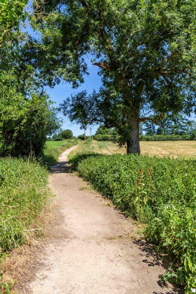 Spring Creek Interpretive Walking Trail is one of the best hiking trails in Dallas