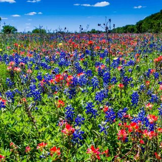 Lake Whitney State Park is one of the must-visit state parks near Dallas