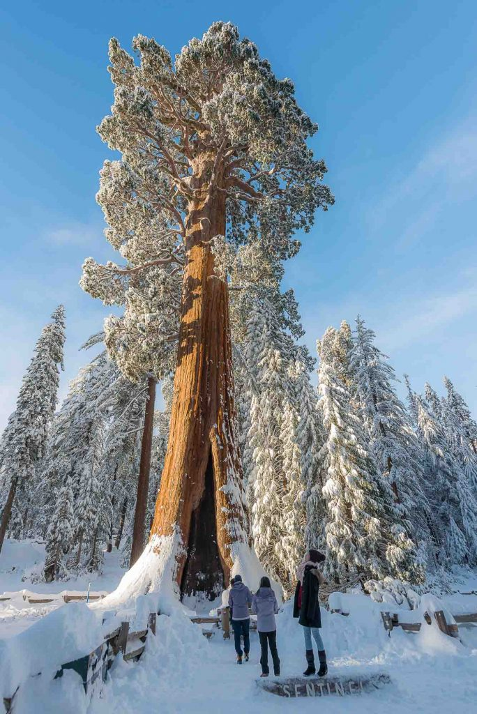 Kings Canyon National Park, California is one of the winter vacations in the US