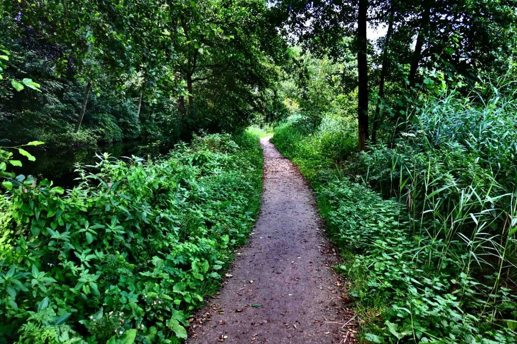 Oak Cliff Nature Preserve Outer Loop is one of the best hiking trails in Dallas