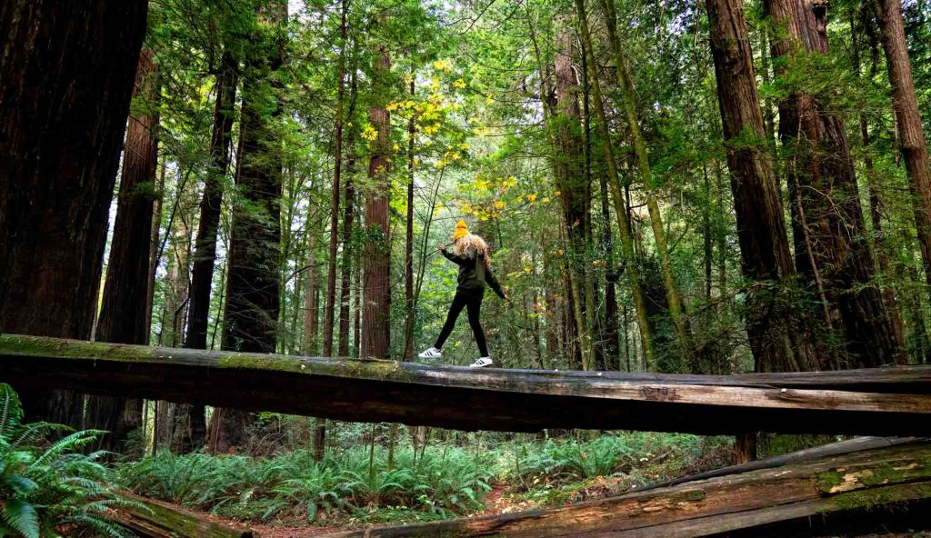 Redwood National Park, California is one of the best fall vacations in the USA