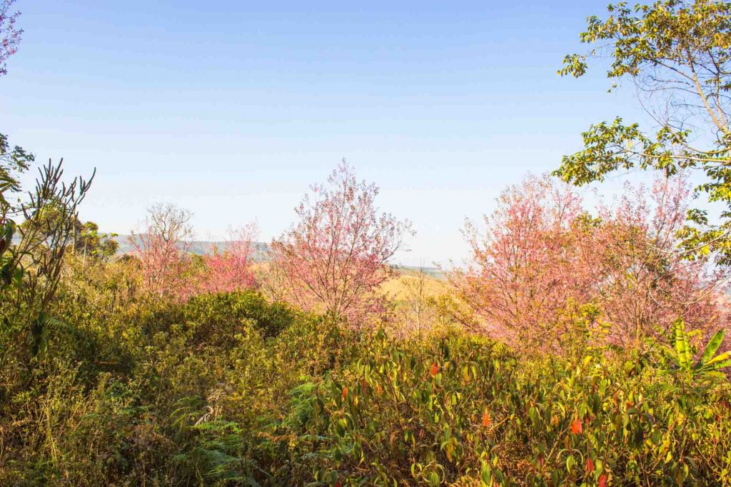 Piedmont Ridge Trail is one of the best hiking trails in Dallas