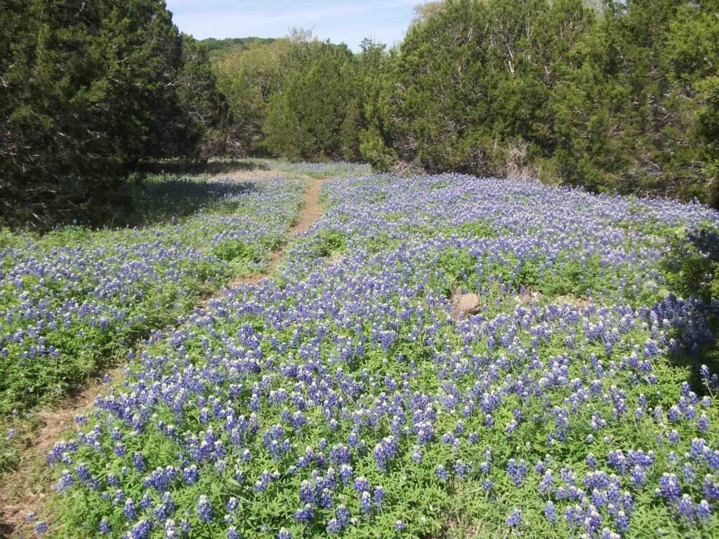 St. Edwards Green and Red Loop is one of the trails for best the hiking in Austin