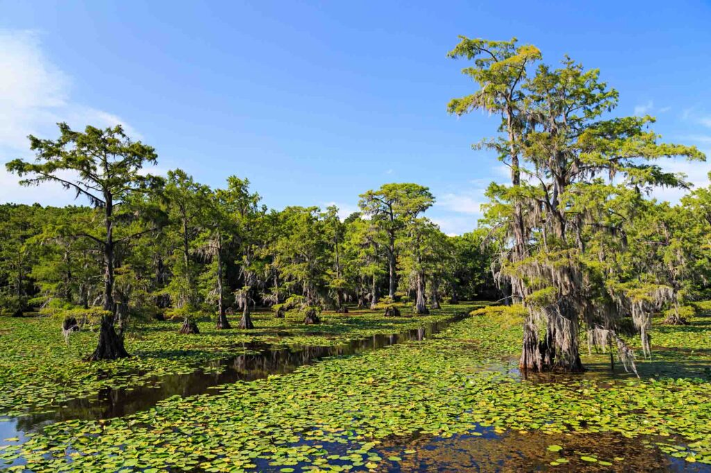 Caddo Lake State Park is one of the best road trips from Dallas
