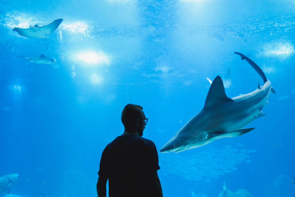 Visiting the Texas State Aquarium is one of the fun things to do in Corpus Christi, TX
