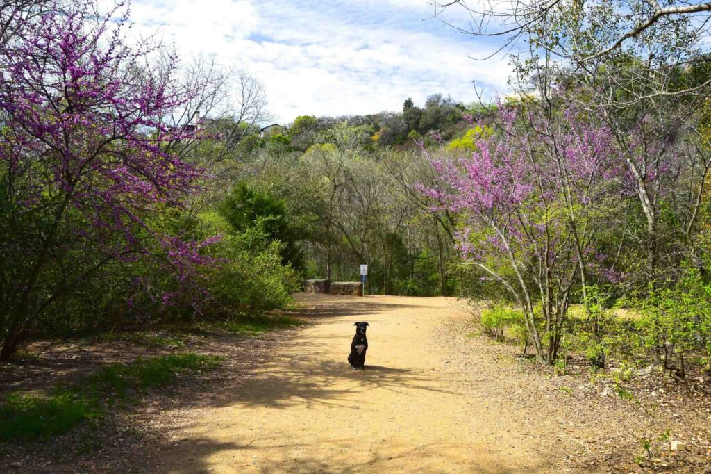 Walnut Creek Trail is one of the best trails for hiking in Austin