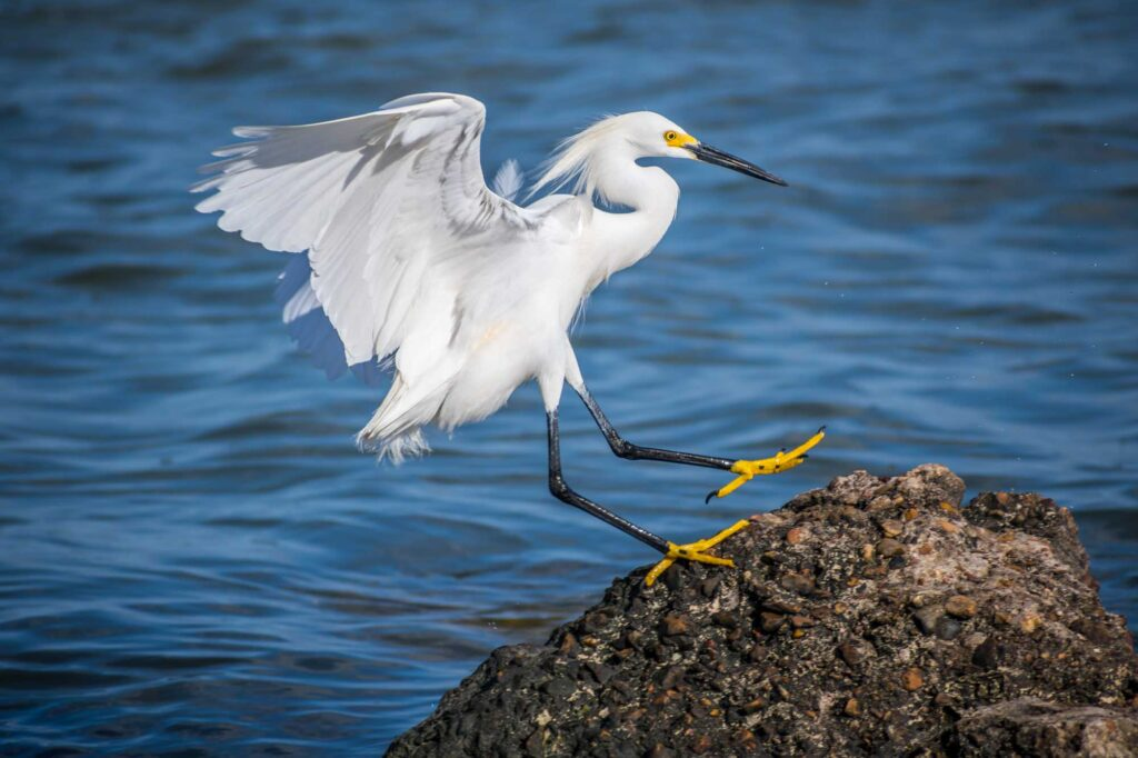Birdwatching in Rockport and the Surrounding Areas is one of the fun things to do in Rockport TX