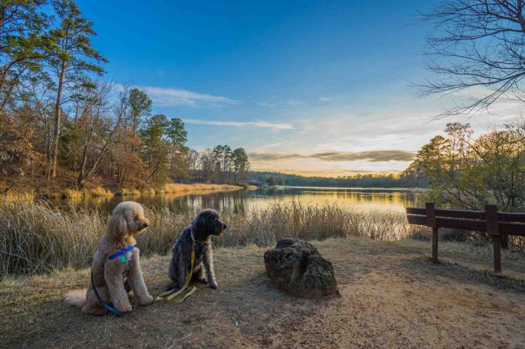 Tyler State Park is one of the best places to enjoy fall in Texas