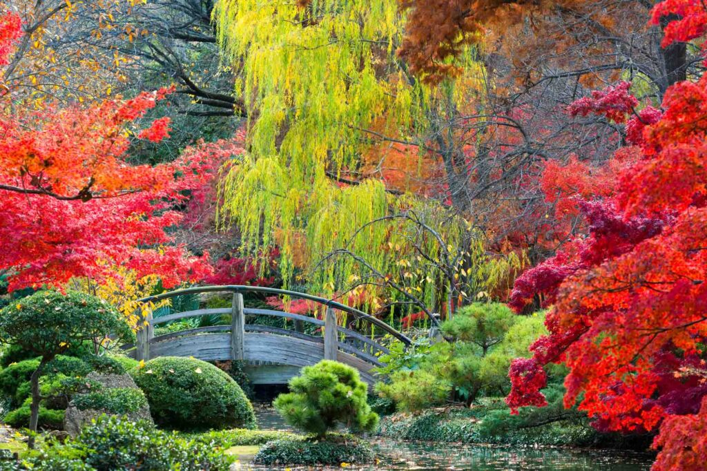 Japanese Garden in Fort Worth is one of the best places to see fall foliage in Texas