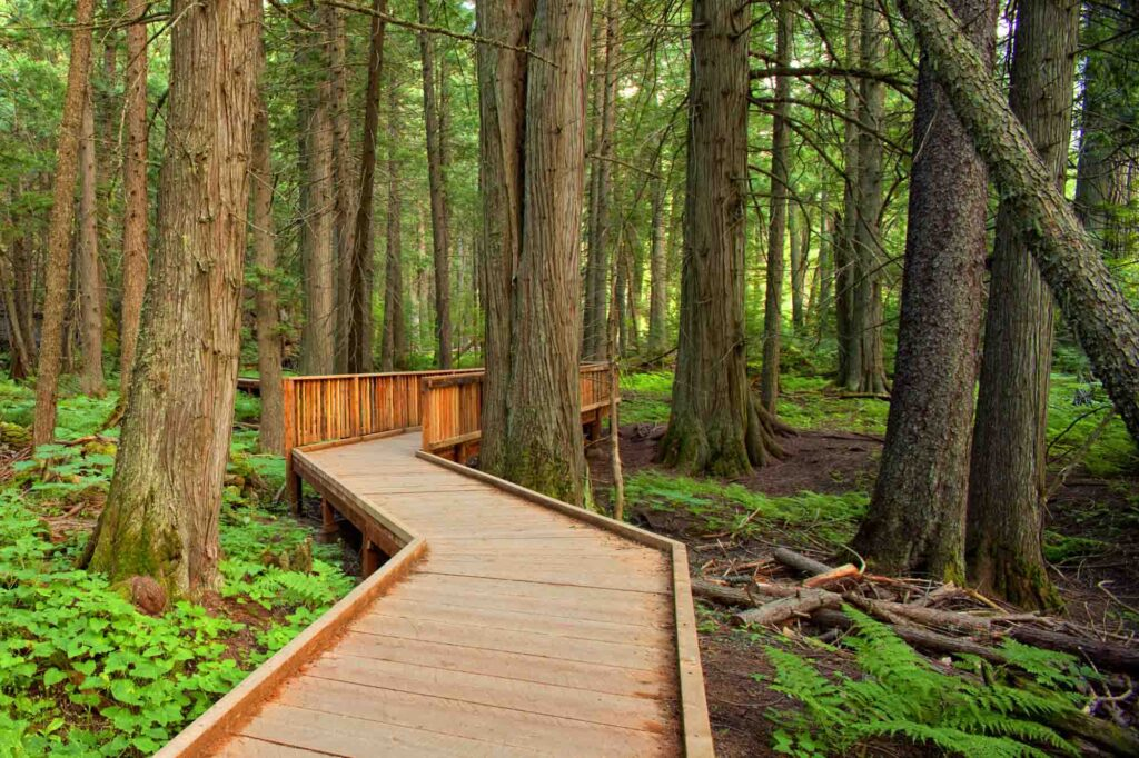 Trail of the Cedars is one of the best hikes in Glacier National Park