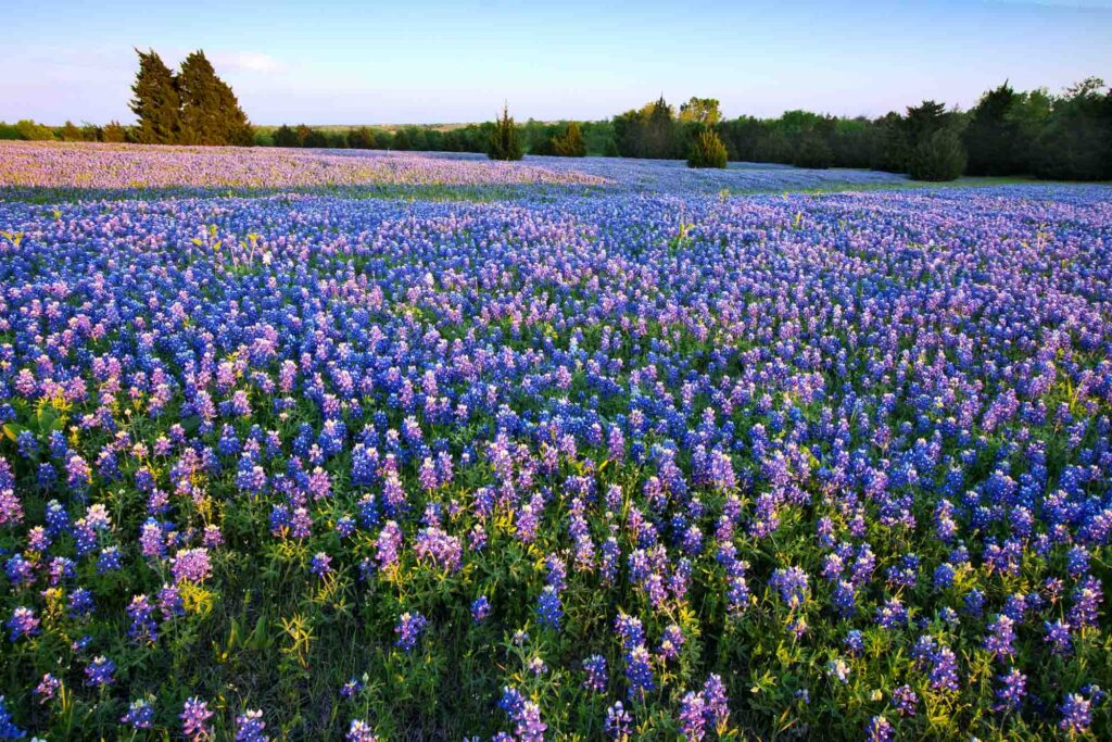 Bluebonnet Trail is one of the places to add to your USA bucket list