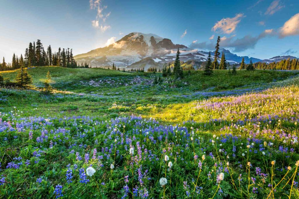 Mount Rainier National Park is one of the best places to visit in the US